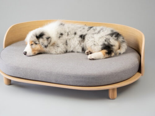 Extra Large Dog Bed – Why It Is Important?